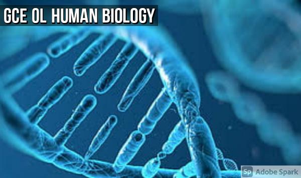 Human Biology: GCE OL Mock Exams